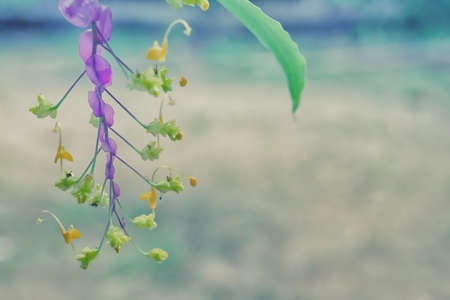 purple and yellow  grass flower  blooming  spring  nature wallpaper   background Reklamní fotografie