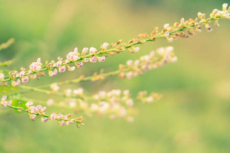 grass  flower blooing spring ,autum nature wallpaper abstract background