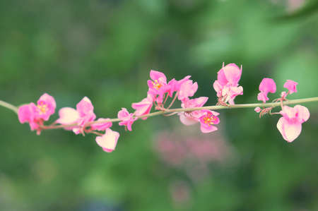 pink flower  blooming spring nature wallpaper background