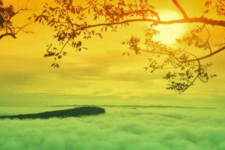 Morning  sunrise landscape background,tree ,sea mist on mountain