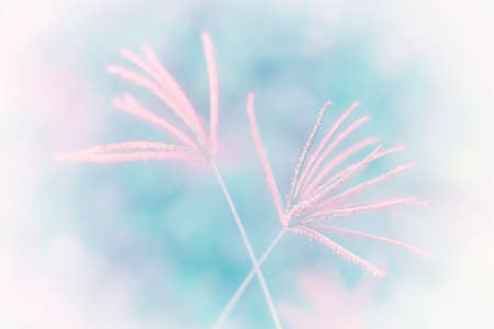 soft focus  pink grass  flower abstract background