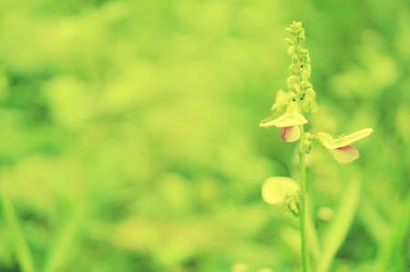 Grass flower blooming spring nature wallpaper background