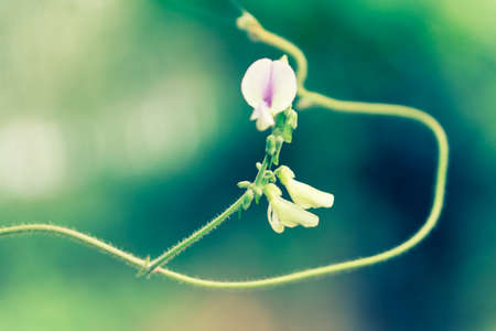 soft  focus  spring grass flower nature wallpaper background Reklamní fotografie - 124728571