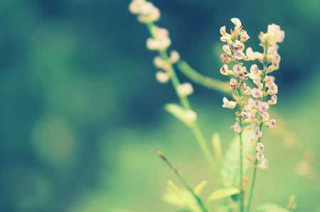 soft  focus  purple  spring grass flower nature wallpaper background Reklamní fotografie - 124728633