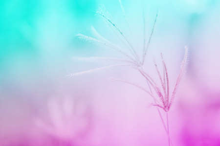 grass flower with colorful  background,abstract spring nature wallpaper background