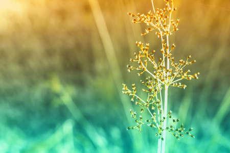 grass flower  blooming  ,spring nature wallpaper background Reklamní fotografie - 124728704