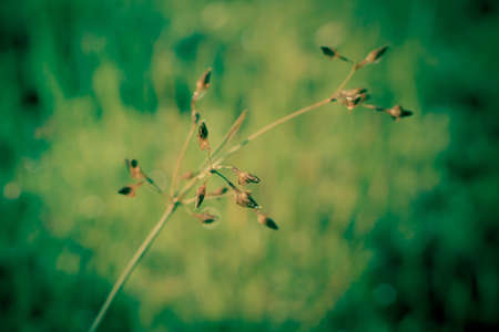 grass flower  blooming  ,spring nature wallpaper background