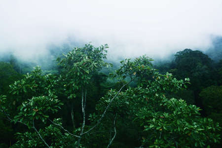 green tropical forest with fog at morning time Reklamní fotografie