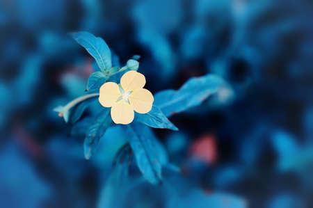soft focus   grass flower  blooming  spring nature wallpaper background Reklamní fotografie - 124728742
