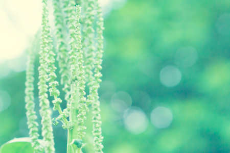grass flower blooming  with bokeh light  spring nature wallpaper background