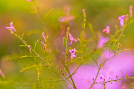 grass flower blooming   spring nature wallpaper background Reklamní fotografie - 124728831