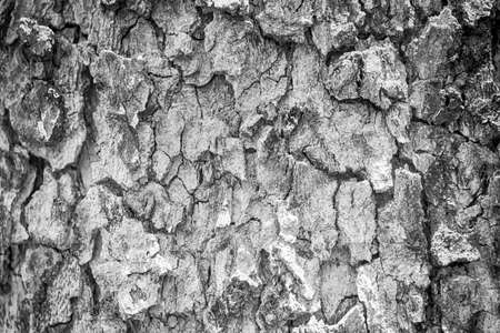 black and white  tree bark texture for background Banco de Imagens