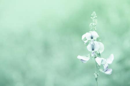 white grass flower at morning time Banco de Imagens