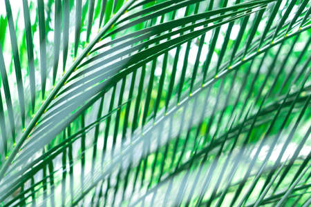 green leaves pattern soft focus  abstract spring summer nature background
