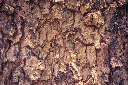 brown  tree bark texture for background