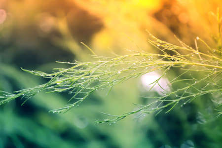 green leaves  with dew drop  at morning sunrise relax nature wallpaper background