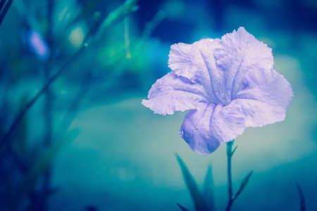 violet flower blooming  at morning  relax spring  nature background Banco de Imagens