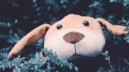 sad  face  of  dog  doll  on green meadow