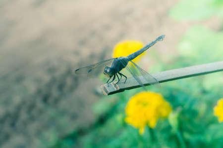 Dragon fly in nature