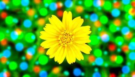 Yellow flower blooming with colorful bokeh abstract spring summer background