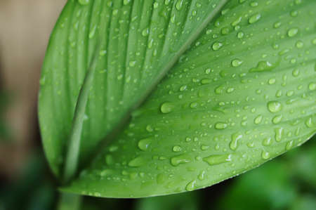 dew drops on green leaf  fresh spring nature relax background