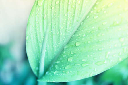 Water  drops  on greenleaves  fresh and relax spring nature background Stock Photo
