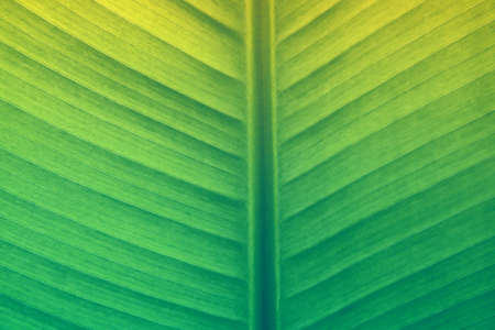 soft  focus  green leaf texture  nature  wallpaper  background