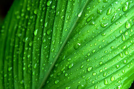 green leaf with dew drop after rain   fresh nature background
