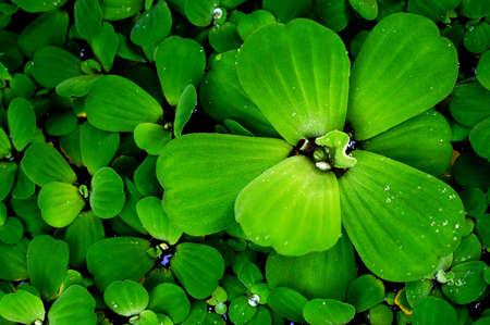 Green leaves  fresh  spring nature relax wallpaper background Banco de Imagens
