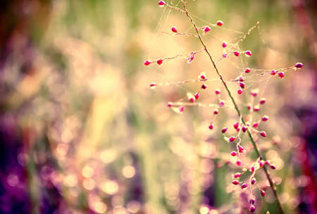 pink grass flower with colorful bokeh  abstract spring,summer ,autumn relax nature wallpaper  background