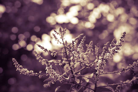 vintage flower  with white bokeh at sunset  spring nature background