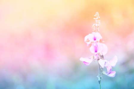 pastel color grass flower spring,summer nature background Banco de Imagens