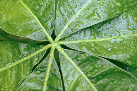 Water  drops  on greenleaves  fresh and relax spring nature background Banco de Imagens
