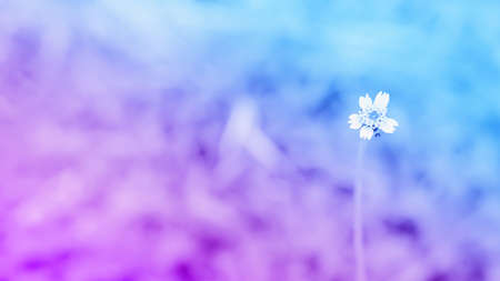 blue and purple  two tone color  with little white  flower grass  abstract spring nature background