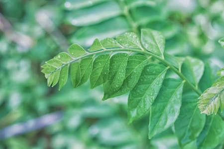 green leaves with dew drop  spring nature wallpaper background Reklamní fotografie