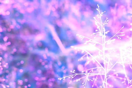 violet bokeh with spring grass flower background