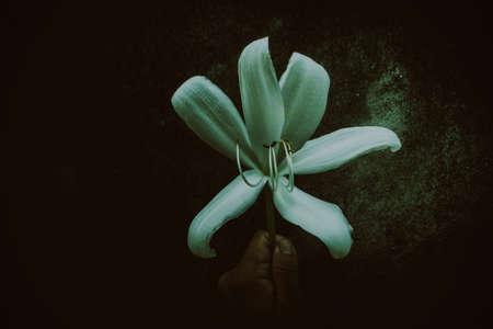 white flower holding on hand ,dark filter effect