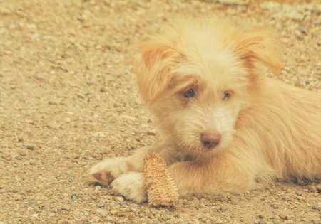 cute dog laying and playing on the ground Reklamní fotografie