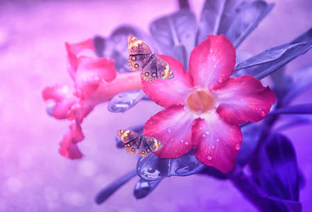 pink flower  blooming with rain drop  and brown butterfly  fresh spring nature  wallpaper  background