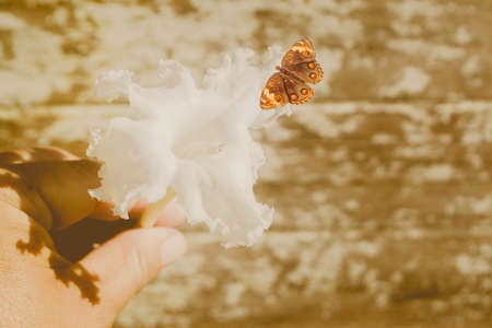 white flower  with brown butterfly