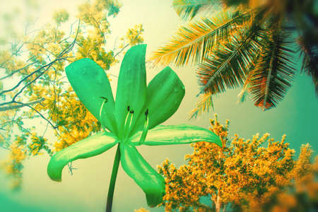 flower and tree  abstract spring nature background