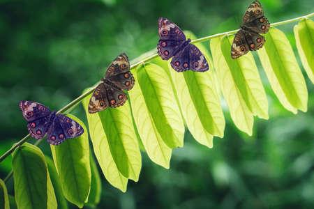 butterfly  on  green leaves  spring  nature wallpaper  background Reklamní fotografie