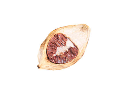 Dry betel nut isolate on white backgroound with clipping path