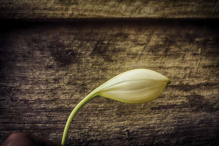 white flower with brown vintage wooden wall texture Reklamní fotografie
