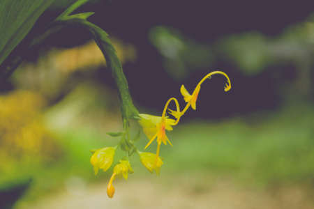 wild  grass  yellow flower blooming  in nature