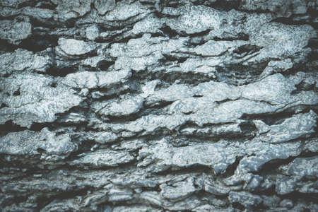 gray concrete  texture wallpaper  abstract background Reklamní fotografie