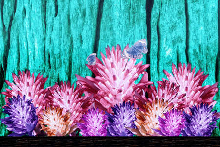 colorful bromeliad flowers blooming  with butterfly  ,spring nature wallpaper background