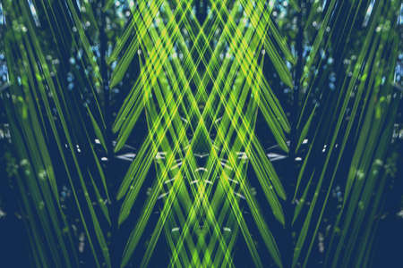 abstract green leaves texture  background Reklamní fotografie