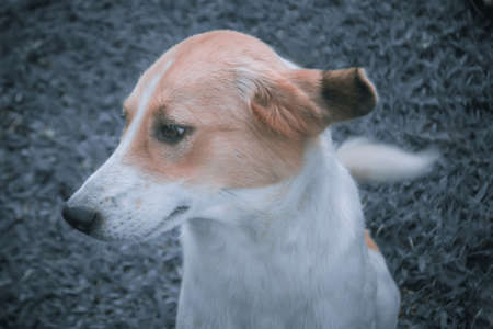 cute brown  and white dog  with filter effect