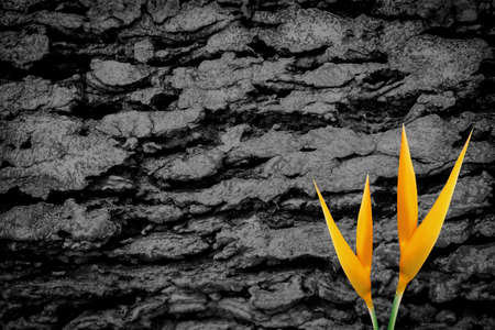 yellow flower  with  grunge gray wall   texture abstract background